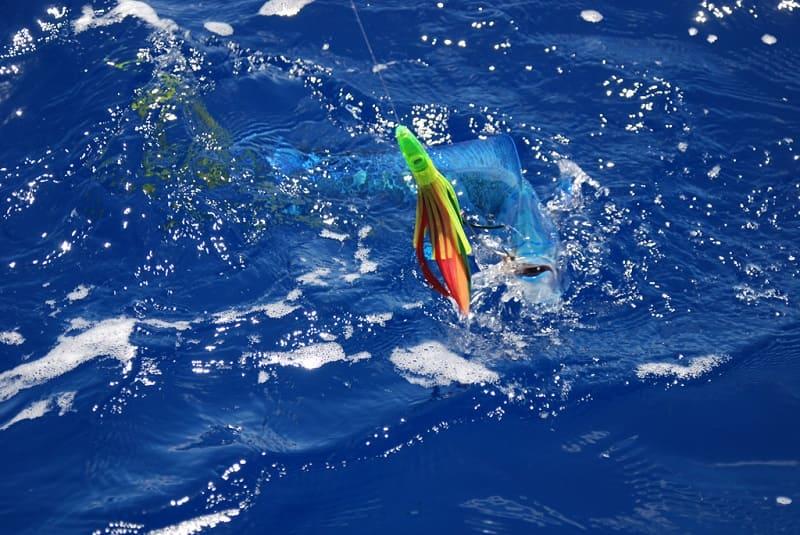 Лучшие способы рыбной ловли в море