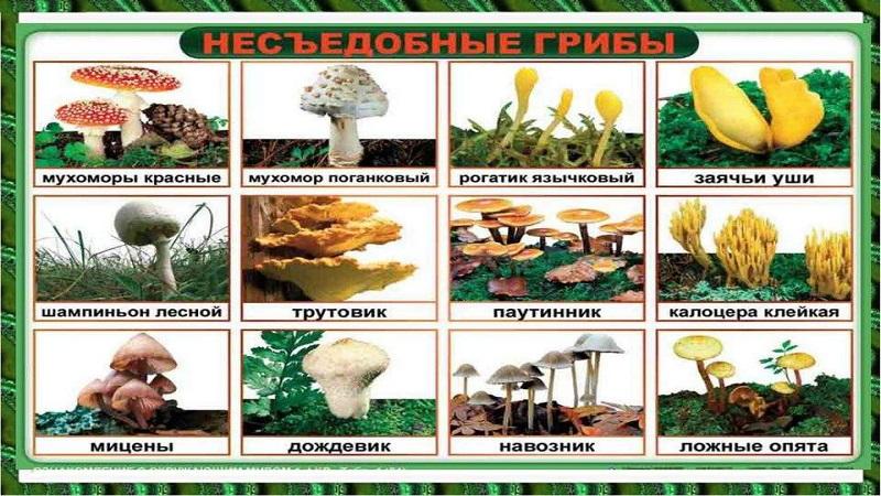 Способы и правила сбора грибов