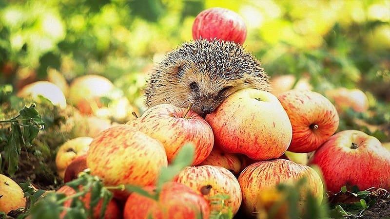 Способы сохранить урожай овощей и фруктов